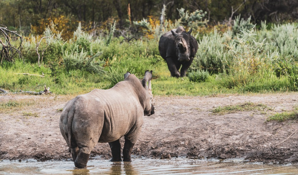 Why are Rhino important?