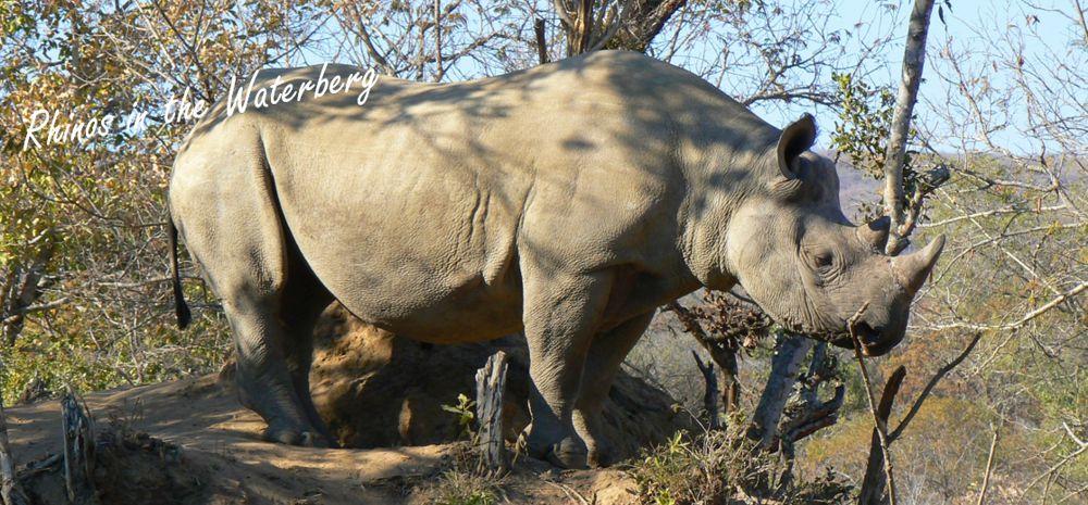 A celebration of rhinos and tourism